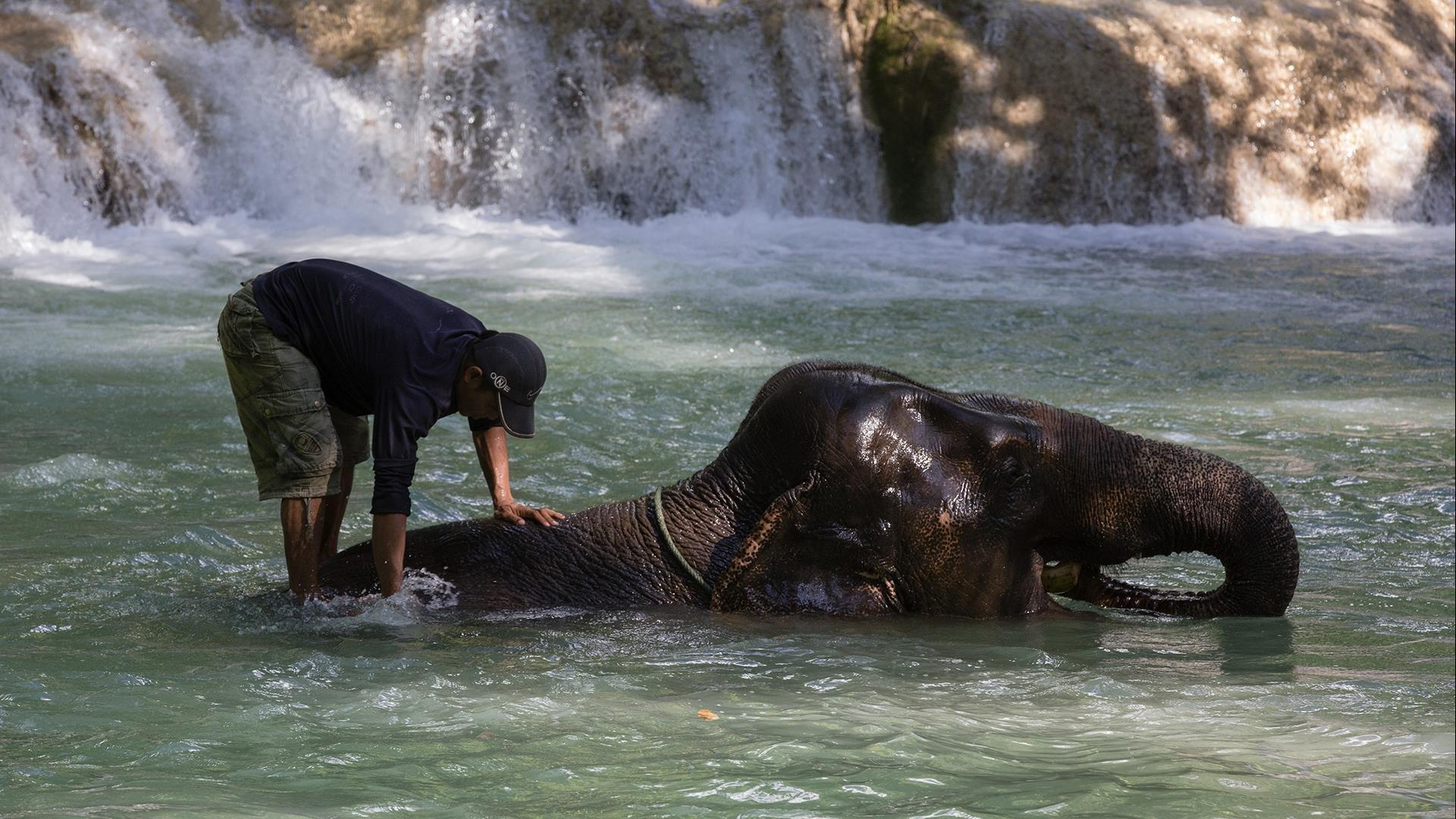 Laos, Luang Prabang : Deluxe Elephant Riding, Bathing, and Mahout Experience - 1 Day | Nature and Elephants