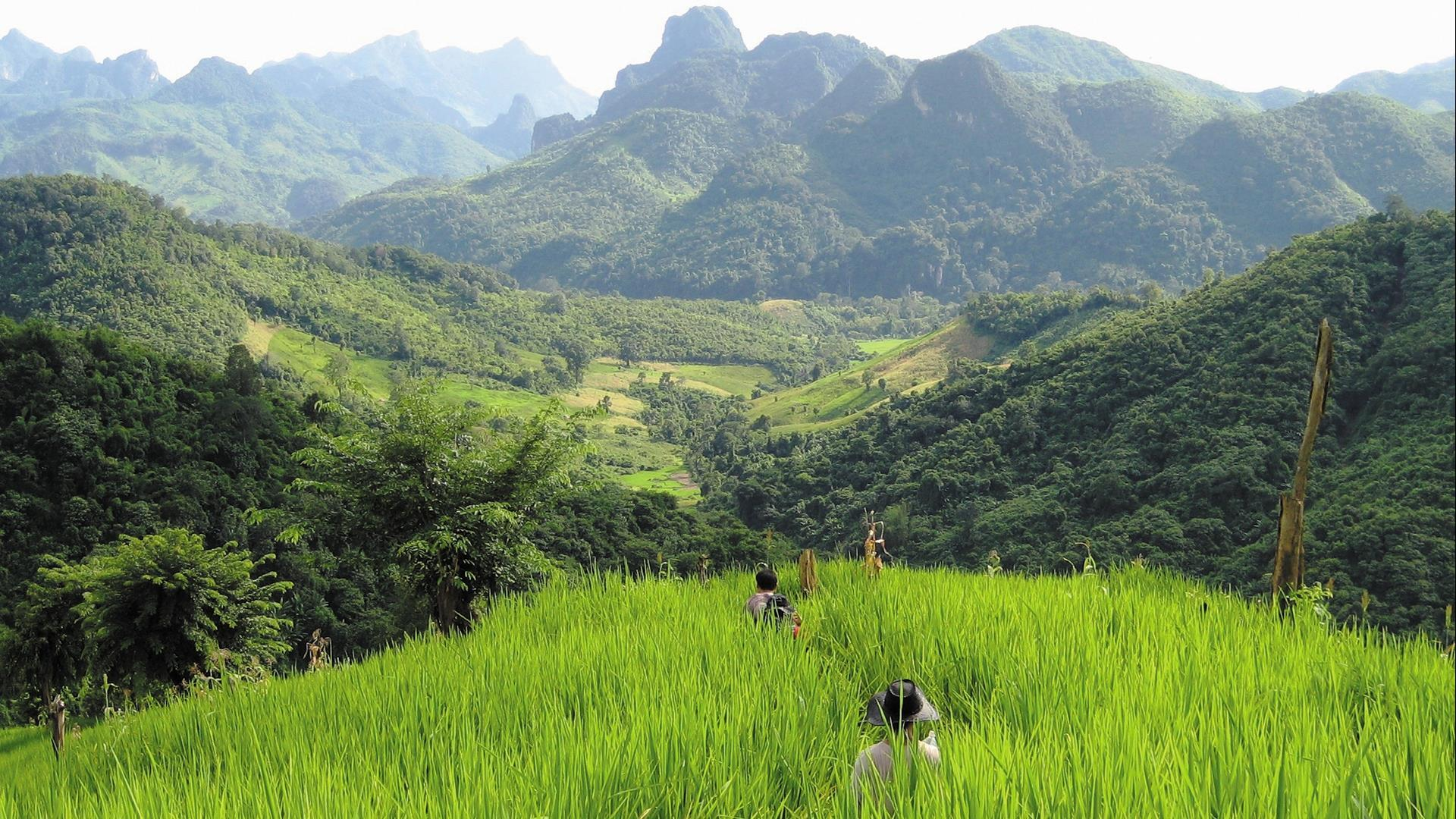 Laos, Nong Khiaw : Nong Khiaw Jungle Trek and Homestay - 2 Days | Nong Khiaw Discovery