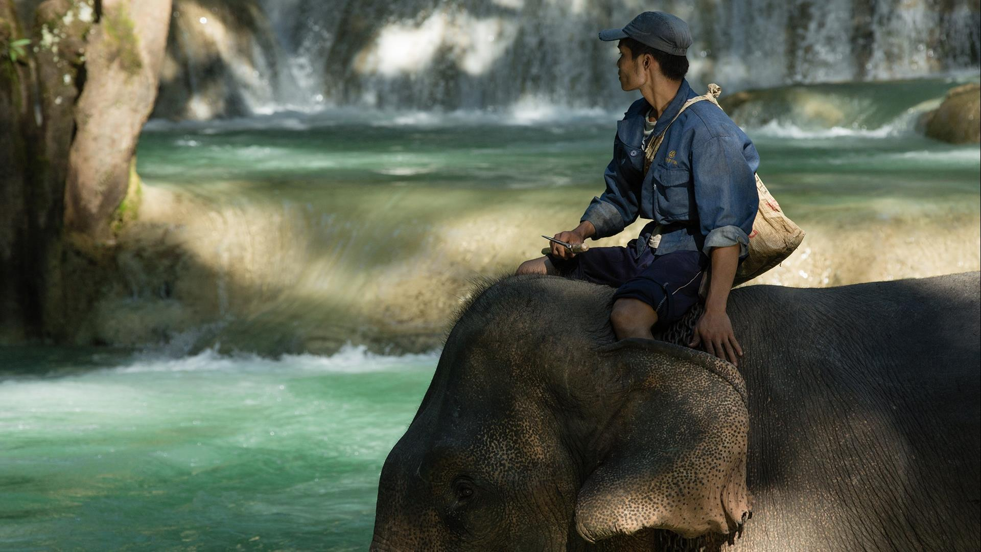 Laos, Luang Prabang: The Authentic Elephant Experience - 2 Days | Living with Elephant Mahout Program at Elephant Village