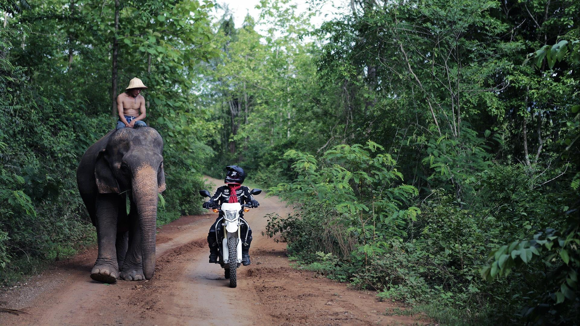 Laos, Luang Prabang: Mekong Elephant Tour - 1 day | A splash of diverse cultures and elephant encounters