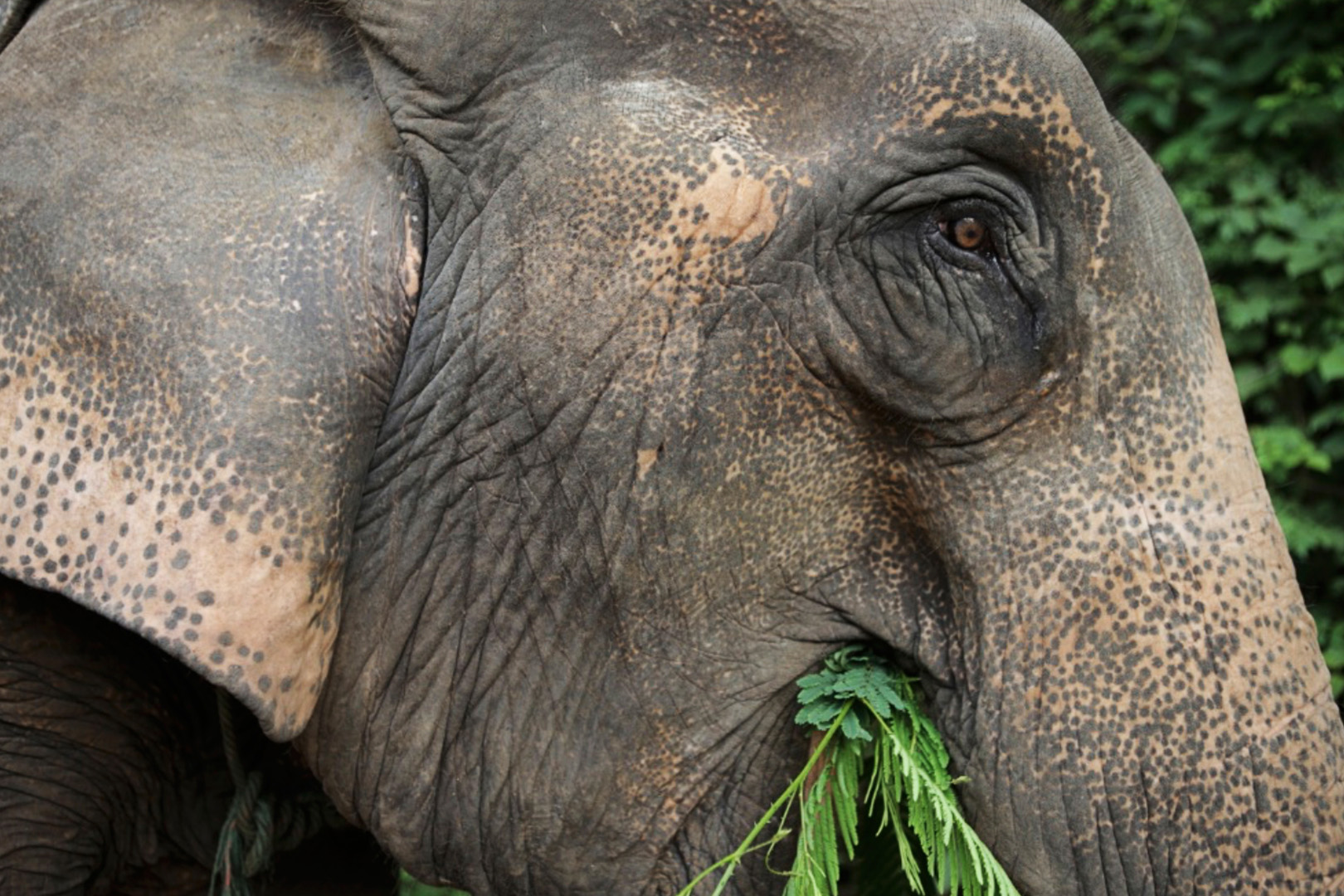 Get up close to Lao elephants